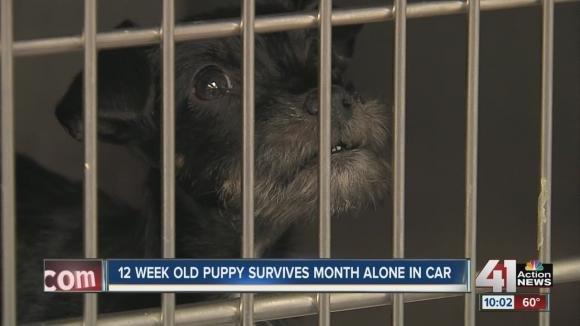 Cagnolino sopravvive un mese chiuso in automobile