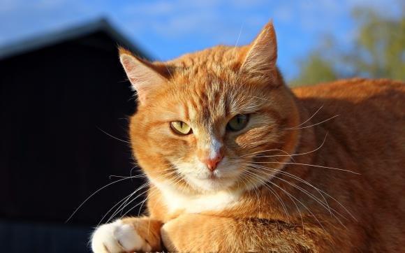 Emilia Romagna, uccide il gatto della vicina a fucilate: denunciato