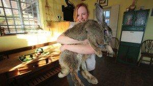 Ralph, il coniglio gigante che pesa oltre 20 Kg