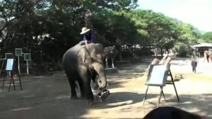 Un elefante pittore dipinge autoritratti (video)