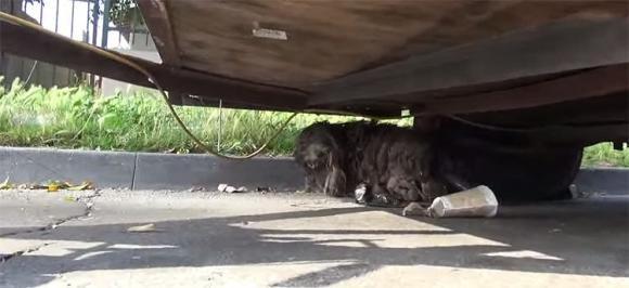 Cane viene trovato abbandonato e spaventato. Ecco la sua trasformazione