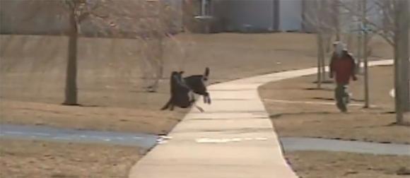 Ogni giorno questo cane aspetta il suo migliore amico per portargli lo zaino a casa
