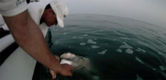 Squalo attacca la barca di un gruppo di spavaldi ragazzi americani