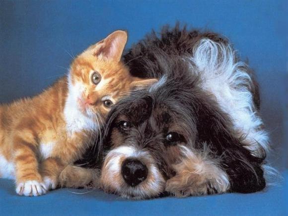"""""""Cani e gatti hanno poteri paranormali"""". Uno studio lo dimostra"""