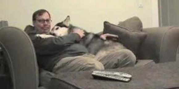 Questo è il modo in cui un cane accoglie il suo padrone ogni giorno quando torna dal lavoro