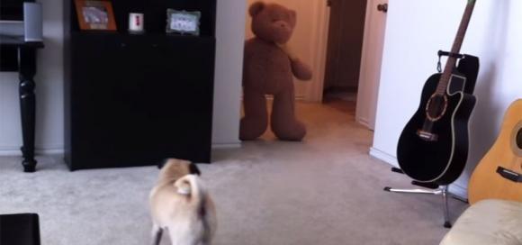 Spaventa il suo cane con un orsacchiotto e l'animale si vendica così