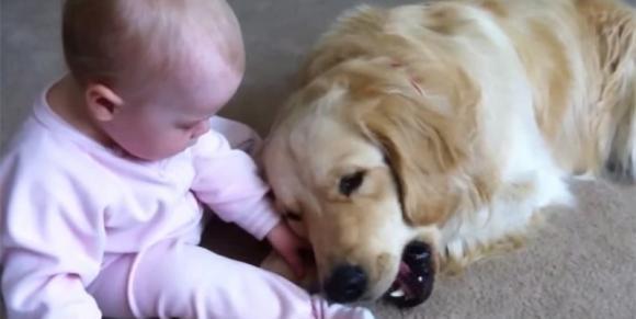 Teneri momenti tra un cane e un bambino che cerca di strappargli un osso dalla bocca