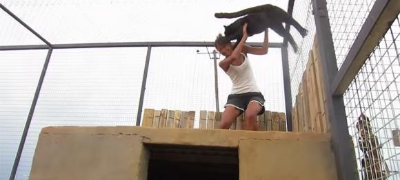 Un leopardo rivede la ragazza che lo ha salvato dopo tanto tempo. La sua reazione è incontenibile