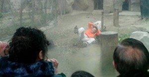 Studente 17enne cade nella fossa di una tigre allo zoo e viene sbranato. Inutili i soccorsi