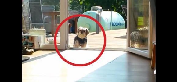 Quando capirete per quale motivo questo cane non entra in casa morirete dal ridere