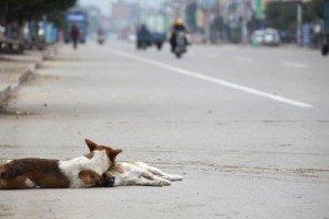 Messico: cane veglia il corpo dell'amico investito da un'auto