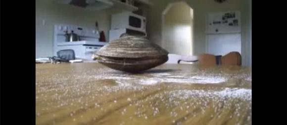 Ecco una vongola che mangia del sale su un tavolo