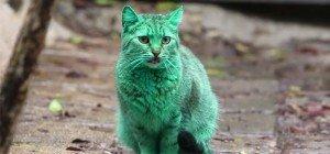Bulgaria: un gatto verde si aggira per le strade