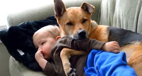Un bimbo ha la febbre. A prendersi cura di lui il suo cane