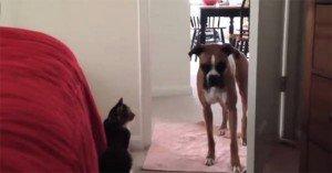 """""""Non passerai, Cane!"""". Ecco il video che fa impazzire il web"""