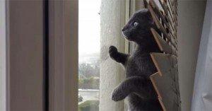 Zoofi, il gattino che vede la neve per la prima volta