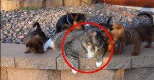 Reggie, il gatto più paziente del mondo!