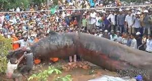 Mistero in Vietnam: un enorme mostro marino ritrovato nel bosco