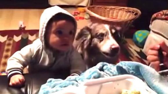 """Cerca di insegnare al figlio a dire """"mamma"""" ma ci riesce il suo cane"""