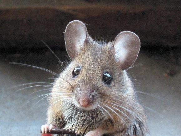 Ratti: sognano i luoghi in cui vorrebbero trovarsi