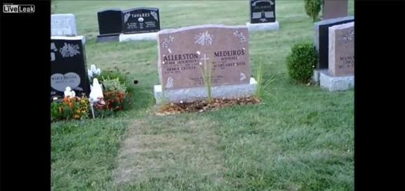 Spariscono i fiori dalla tomba della madre. Ecco cosa succede