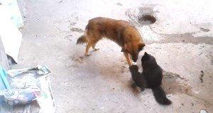 Mamma gatto porta i cuccioli da un suo vecchio amico. Adorabile!