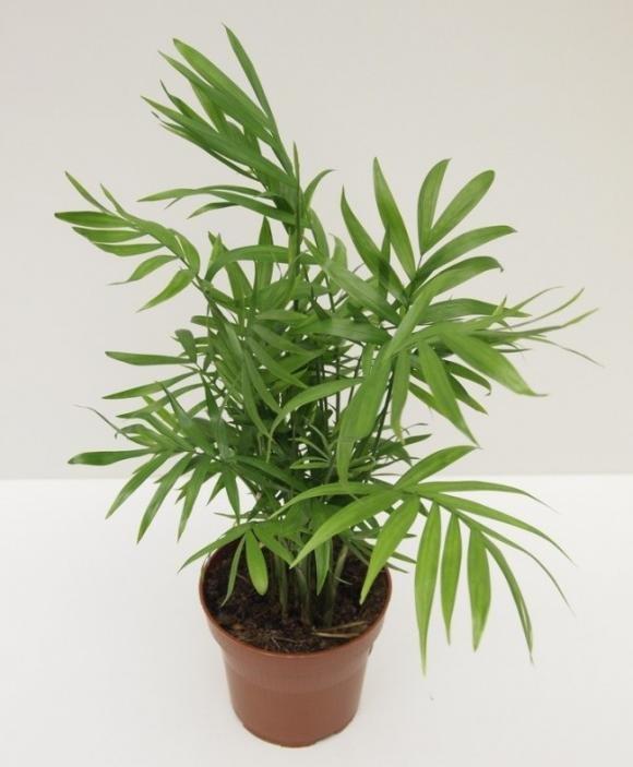 Ecco 9 piante da interno che purificano l'aria di casa ...