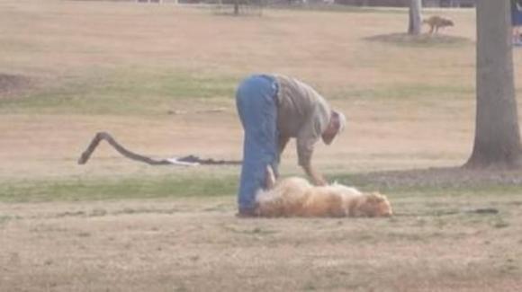 Cane si finge morto per restare al parco a giocare: è subito virale