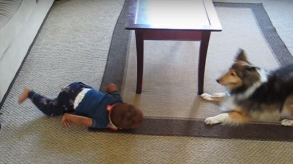 Un cane e un bambino giocano insieme. Quello che fa il piccolo è bellissimo!