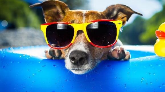 Apre a Bari il primo dog water park, piscina per cani e proprietari