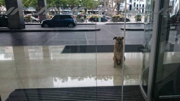 Questo cane aspetta ogni giorno una donna fuori dal suo hotel. Ecco il motivo