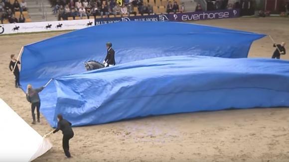 Un cavallo inizia l'esibizione. Quello che succede dopo vi lascerà senza parole