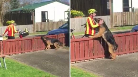 Un cane aspetta ogni giorno l'arrivo del postino. Ecco cosa succede in quel momento