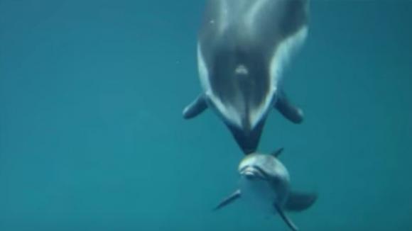 Lavora in un acquario e riprende un momento meraviglioso. Ecco cosa fa questo delfino
