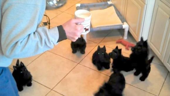 Una donna dice ai suoi cuccioli che la pappa è pronta. La loro reazione è davvero divertente!
