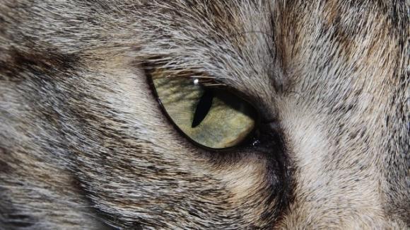 In Russia è in vendita un gatto che si dice sia magico
