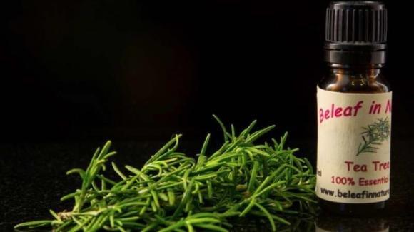 Olio di Tea Tree: olio miracoloso dai mille usi