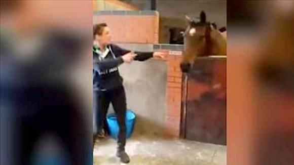 La donna accende la musica ed inizia a ballare. La reazione del cavallo è esilarante!