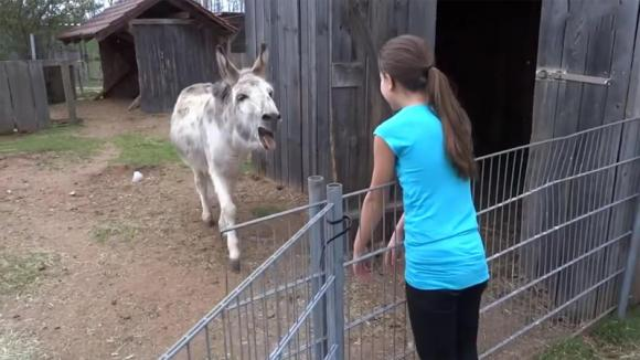 Un asino vede una ragazza ed impazzisce di gioia. Quello che accade è commovente!