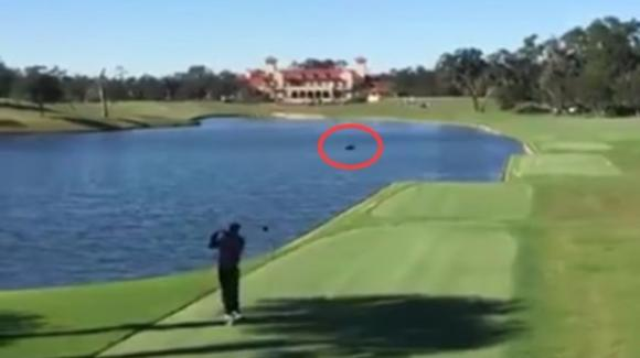 Un golfista tira la pallina e tristemente abbatte un'anatra in volo
