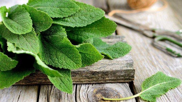 foglie di alloro per dimagrire