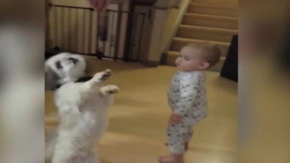 Il cane si alza in piedi per afferrare la crocchetta. Ma è quello che fa il bimbo che vi farà ridere di gusto