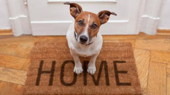 Come rendere la casa pet-friendly