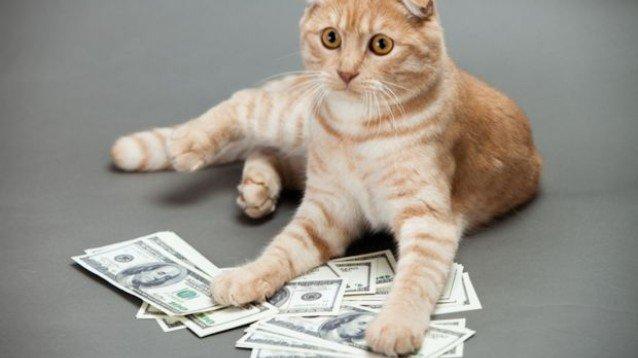 opzione modalità demo robot cripto gattini puoi fare soldi