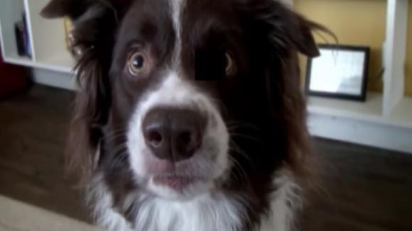 Chiede al suo cane di ridere per la foto. La reazione dell'animale è esilarante!