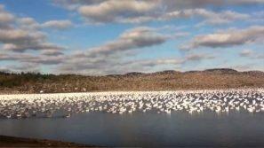 Nota migliaia di uccelli sulla spiaggia. Quello che accade poco dopo è meraviglioso!