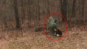 """Un uomo sta piantando l'abete: poco dopo è coinvolto in un incontro di """"wrestling"""" con il suo cane"""