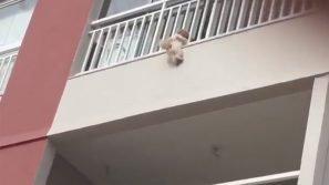 Spaventata dai petardi di fine anno, si lancia dal 3° piano: il salvataggio di questa cagnolina è miracoloso