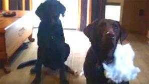 Il padrone chiede chi ha combinato il guaio. La reazione del cane è esilarante!