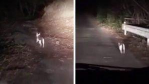 Un gatto lo invita a seguirlo per il sentiero: l'uomo lo asseconda e alla fine non se ne pente